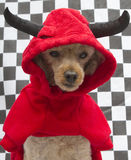 Devil Dog On Checkered Background Royalty Free Stock Photos