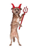Devil Dog With Pitch Fork Royalty Free Stock Photo