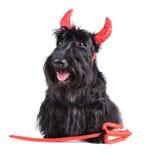 Devil dog Royalty Free Stock Photo