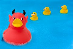 Devil duck 1. A devilish duck leading the ducklings astray stock image