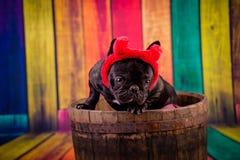 Devil french bulldog Royalty Free Stock Image