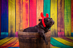 Devil french bulldog Royalty Free Stock Photography