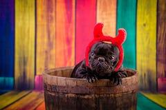 Devil french bulldog Stock Photo