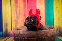 Devil french bulldog Royalty Free Stock Photos