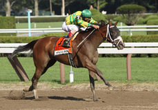 Devil May Care Wins Coaching Club American Oaks Royalty Free Stock Photos
