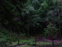 Devil& x27; parco di stato geologico di s Millhopper fotografia stock libera da diritti
