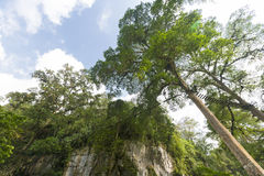 Devil's Cave, canopy and forest in Merida State royalty free stock image
