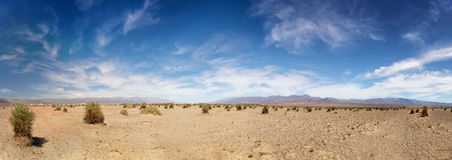 Devil`s Cornfield in Death Valley Royalty Free Stock Photography