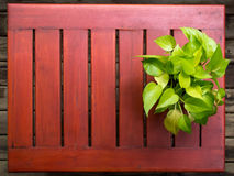 Devil's Ivy in pot ,on wooden table stock images