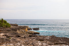 Devil's tear, Nusa Lembongan island, Indonesia Royalty Free Stock Image