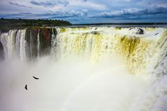 Andean condors fly above the roaring water. The Devil`s Throat is the most grandiose part of the Iguazu Falls. The rainy season. Andean condors fly above the stock photos