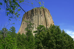 Devil's Tower Branch Stock Photography