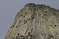 Devil's Tower Royalty Free Stock Photography