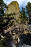 Devil's Tower with Trees. This photo was taken of Devils Tower and has pine trees, rocks, and branches in the foreground Royalty Free Stock Photography