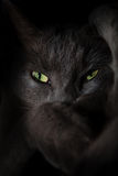 Devil spooky cat eyes Stock Images