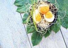 Deviled jajek kwiatów wiśnie kawowe Fotografia Stock