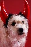 devilish hund Royaltyfria Foton