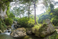 Devils Cave, canopy and forest in Merida State Royalty Free Stock Photos