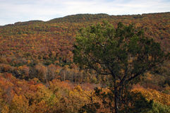 Devils' Den State Park Overlook Royalty Free Stock Photo
