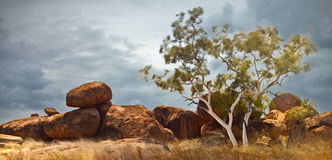 Devils marbles Australia Northern territory. Devils marbles Northern territory Australia, giant granite boulders formed by erosion white gum ghost tree, long Stock Image