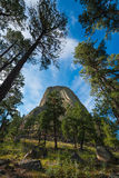 Devils Tower from below. The famous Devils Tower in Wyoming from a hiking trail Stock Images