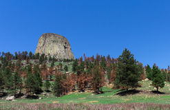 Devils Tower mountain with a blue sky on the background and green trees and grass on the foreground Stock Photography