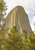 Devils Tower Peeking out from the Pines Stock Photography