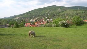 Devin Castle Slovakia 02 stock video