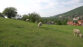 Devin Castle Slovakia 01 stock video