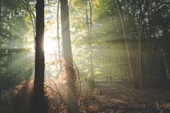 Devine intervention. Sunlight streaming in around trees in wonderful autumnal forest of Amerongen stock image