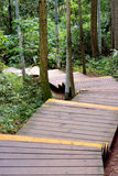Devious path in forest. Wooden path and stage in forest, shown as channel, flow, access and approach Stock Photo