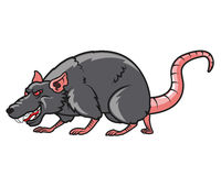 Devious Rat Stock Photo
