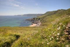 Devon Coastline in summer Royalty Free Stock Image