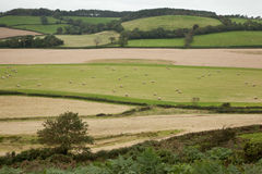 Devon Landscape View Stock Image