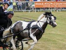 Devon, Reino Unido - 30 de julho de 2018: Scurry que conduz, experimentações equestres do tempo com transportes foto de stock