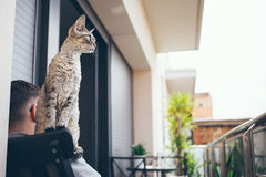 Devon Rex cat and human are on the balcony sitting on armchair and enjoying being outside Royalty Free Stock Photos