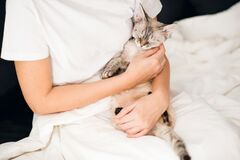 Free Devon Rex Cat Is Lounging In Owners Arms In A Bed. Feeling Comfortable Relaxed. Cat Came Into The Bed On The Morning And Girl Is Royalty Free Stock Photos - 202817678