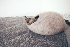 Devon Rex cat is sleeping in felted warm sleeping bed. Cat likes to sleep in comfartable cat bed made of wool - simple, minimal handmade design. Happy chilling Stock Photo