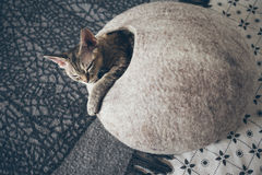 Devon Rex cat is sleeping in felted warm sleeping pet cave. Cat likes to sleep in comfortable and safe cave made of wool - simple minimal handmade design Royalty Free Stock Photo
