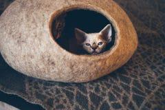 Devon Rex figlarka i kot śpimy w felted ciepłym dosypiania zwierzęcia domowego łóżku Fotografia Stock