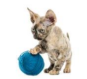 Devon-rex Kätzchen mit einem Wollball lokalisiert auf Weiß Lizenzfreies Stockbild
