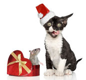 Devon Rex kitten in Santa Christmas red hat Stock Image