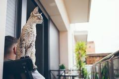 Devon Rex kot z istotą ludzką na balkonowym obsiadaniu na krześle Zdjęcia Royalty Free