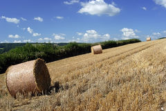 Devon scena obszarów wiejskich Obraz Royalty Free