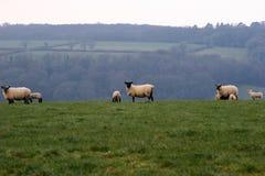 Devon scena obszarów wiejskich Obrazy Royalty Free
