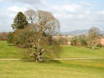 Devon Springtime Landscape do leste fotografia de stock