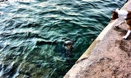 Torquay seal met dog. Torquay summer , amazing water , Devon, United Kingdom Royalty Free Stock Photography