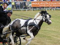 Devon, UK - July 30 2018: Scurry driving, equestrian time trials with carriages stock photo