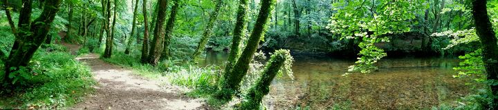 Devon Woodland Riverwalk Stock Foto's