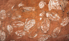 Devonian fish fossil Stock Images
